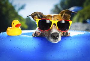 animaux été vacances